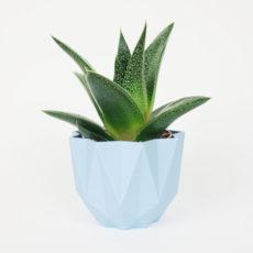 QB Maker pot cactus bleu pastel